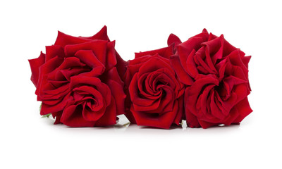 bouquet of beautiful red roses on the white background