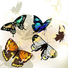 Fashion background with vector butterflies