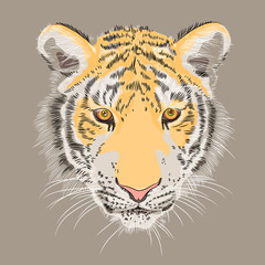 vector closeup portrait of a serious  tiger