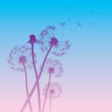 vector dandelion color background