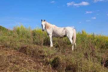 white horse on the hill