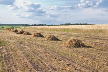 straw hill raws