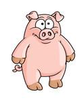 Fototapety Fat happy pink cartoon pig
