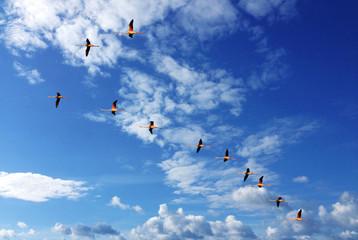 Zugvögel Flamingos am Himmel