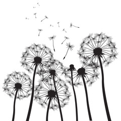 vector dandelion background