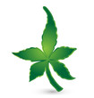 Green leafs cannabis nature concept icon