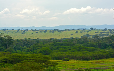 Forest and Savanna in Africa