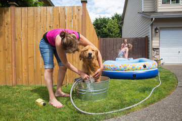 dog bath with a garden hose