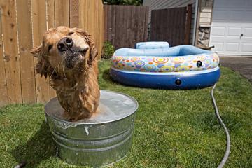 Wet Dog Shake