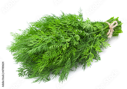 Dill herb - 67180624