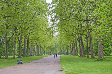 People walking in a large park with trees