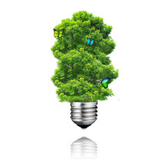 go green eco energy concept,butterfly on plant light bulb