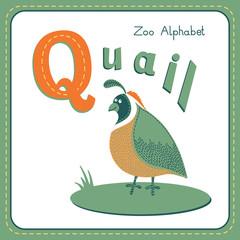 Letter Q - Quail