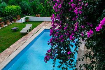 purple flowers pool