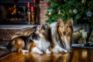 Christmas Ready
