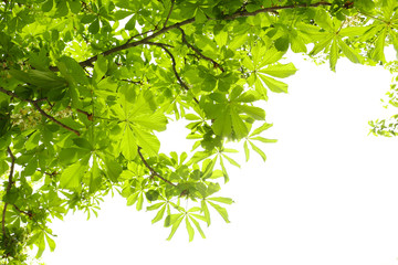 Beautiful green leaves on tree in spring, outdoors
