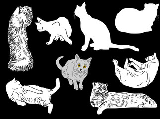 eight cats collection isolated on black background