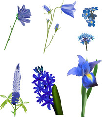 set of seven isolated blue flowers