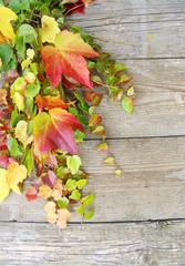 """Herbstmotiv """"wilder Wein"""""""