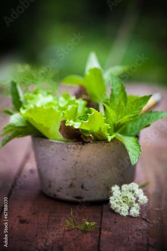 Fresh lettuce in the garden.