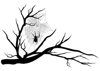 spider web on tree branch