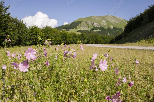 Paesaggio estivo al Monte Catria