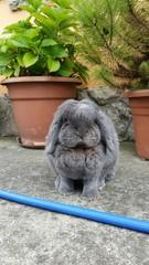 Conejo gris en el jardín
