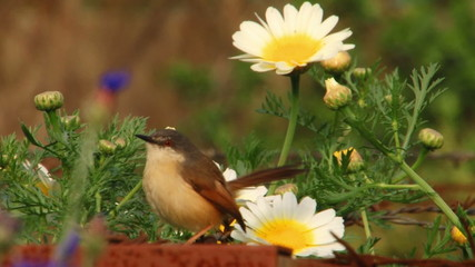 A little bird among the flowers