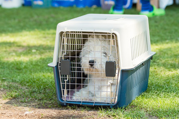Small dog in cage