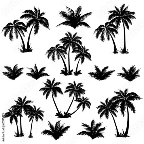 Tropical palm trees set silhouettes - 67192883