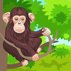 vector of funny monkey chimp in the jungle