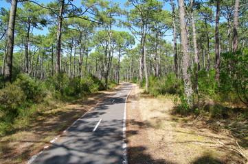 Fahrradweg durch Pinienwald in Lacanau Ozean 4