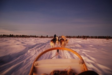 Lapland Dreamin