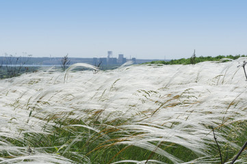 White feather grass on the background of an atomic power station