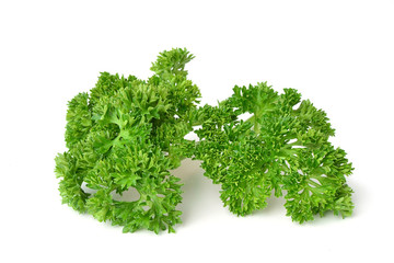 Curly parsley isolated