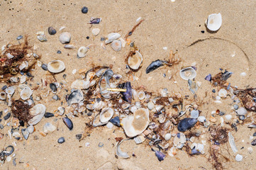 Sea shells on beach sand