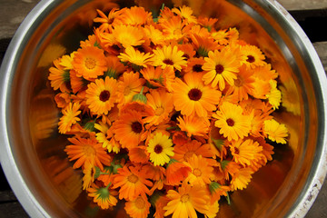 Collected calendula flowers.