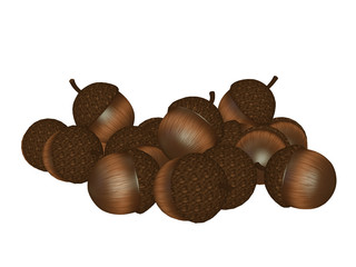acorns isolated on white background illustration