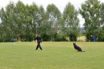 Hundetrainer uebt mit Schaeferhund