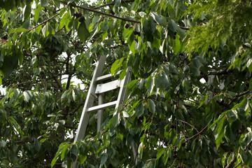 Aluleiter im Baum