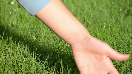 human hand touch feel wet grass covered with morning dew drops