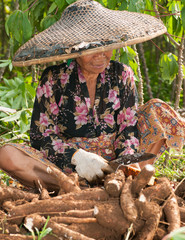 Cassava field worker