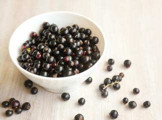 black currant berries in white plate, soft focus