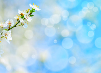 Spring flowers against blue bokeh background