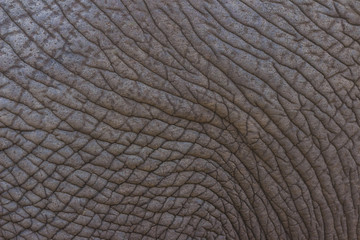 Detailed elephant skin texture