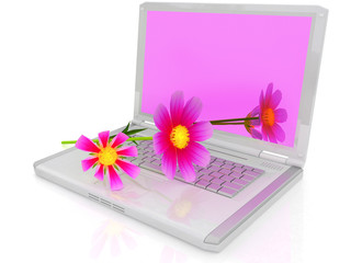 cosmos flower on laptop