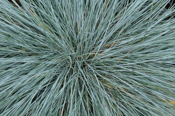 A Floral Background of a Turquoise Grass Plant.