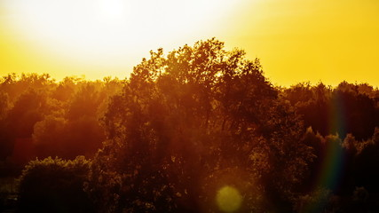 Evening sun over trees. Sunset. HD 1080.