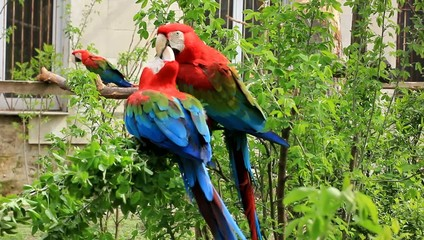 Colorful parrot in zoo