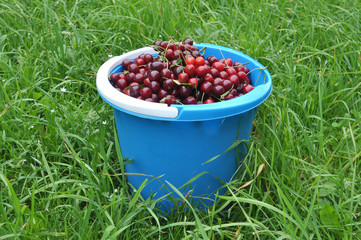 Blue bucket with cherry